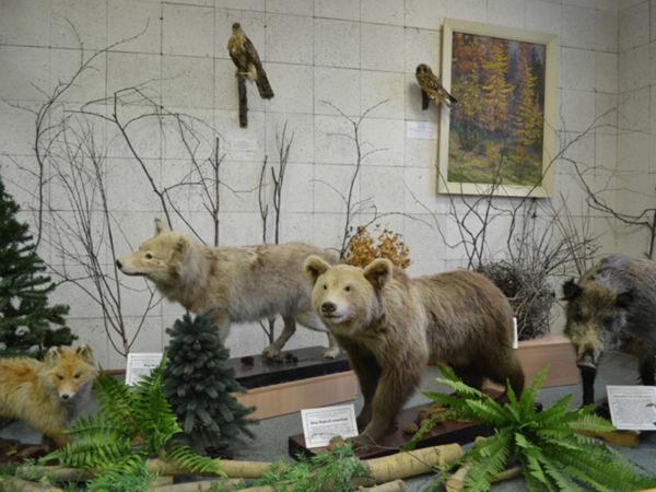 Горнозаводский краеведческий музей им. М.П. Старостина приглашает гостей на бесплатные интерактивы и мастер-классы